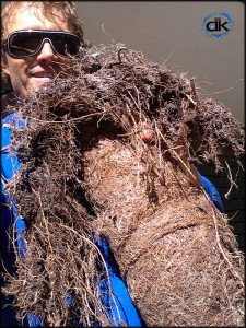 Tree roots pulled from blocked drain Sunshine Coast