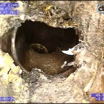CCTV drain inspection / Pipe Survey - Blocked drain