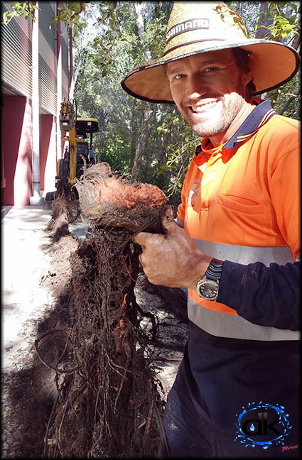 drain unblocked, tree roots removed to clear drain