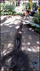 roots pulled from stormwater